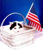 Patriotic_kitty